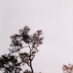 vietnam tree